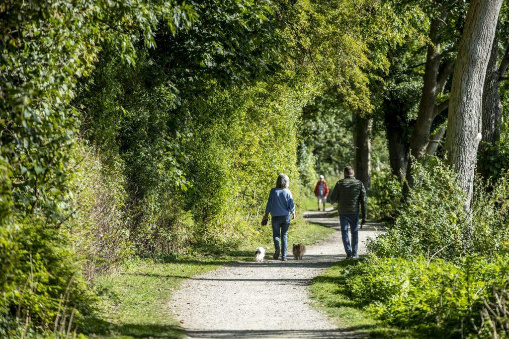 Hunde og mennesker der går tur i Naturlandet