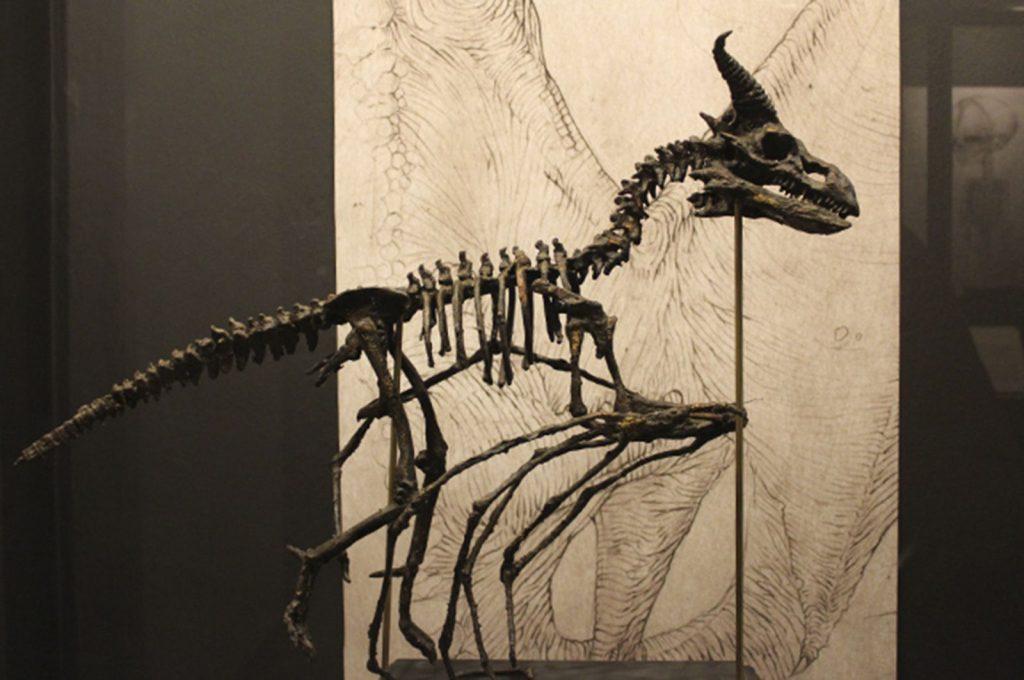 Lille skelet af drage
