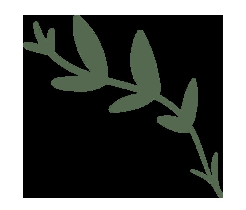 Tegning af gren